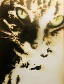 Cindercat