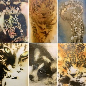 AnimalsGunpowderart